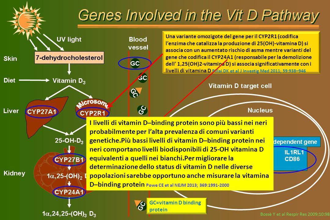 Bossè Y et al Respir Res 2009;10:98 GC=vitamin D binding protein Una variante omozigote del gene per il CYP2R1 (codifica l'enzima che catalizza la pro