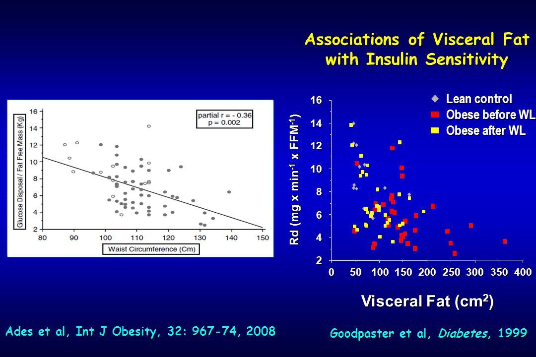 Associations of Visceral Fat with Insulin Sensitivity 300200500 2 4 6 8 10 12 14 16 100150250350400 Rd (mg x min -1 x FFM -1 ) Visceral Fat (cm 2 ) Lean control Obese before WL Obese after WL Goodpaster et al, Diabetes, 1999 Ades et al, Int J Obesity, 32: 967-74, 2008