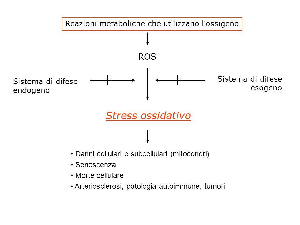 Reazioni metaboliche che utilizzano l'ossigeno ROS Stress ossidativo Sistema di difese endogeno Sistema di difese esogeno Danni cellulari e subcellulari (mitocondri) Senescenza Morte cellulare Arteriosclerosi, patologia autoimmune, tumori