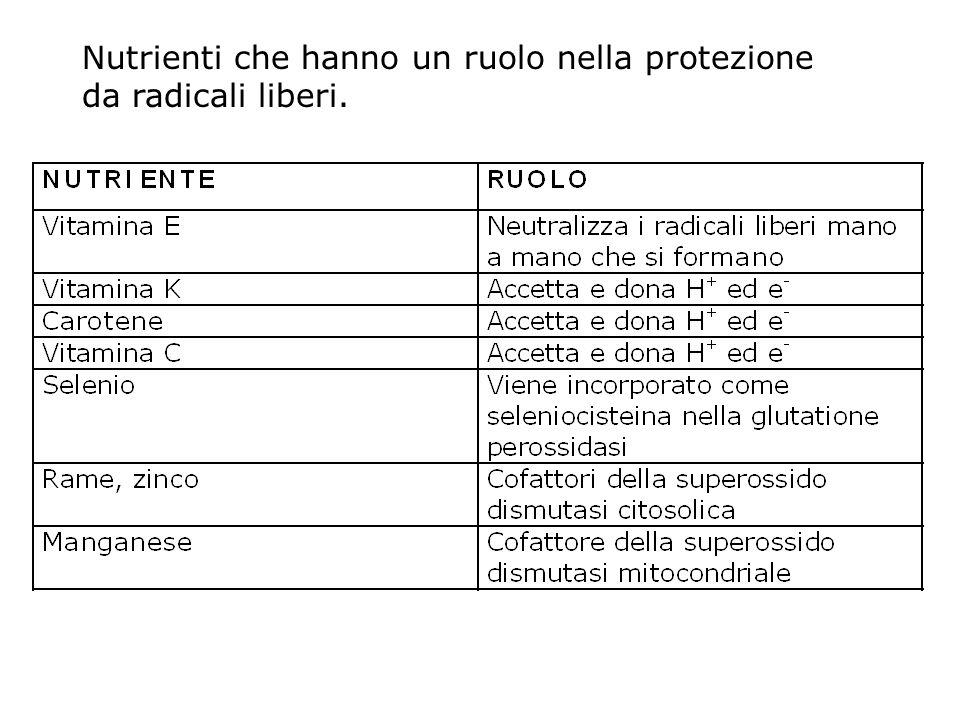 Nutrienti che hanno un ruolo nella protezione da radicali liberi.
