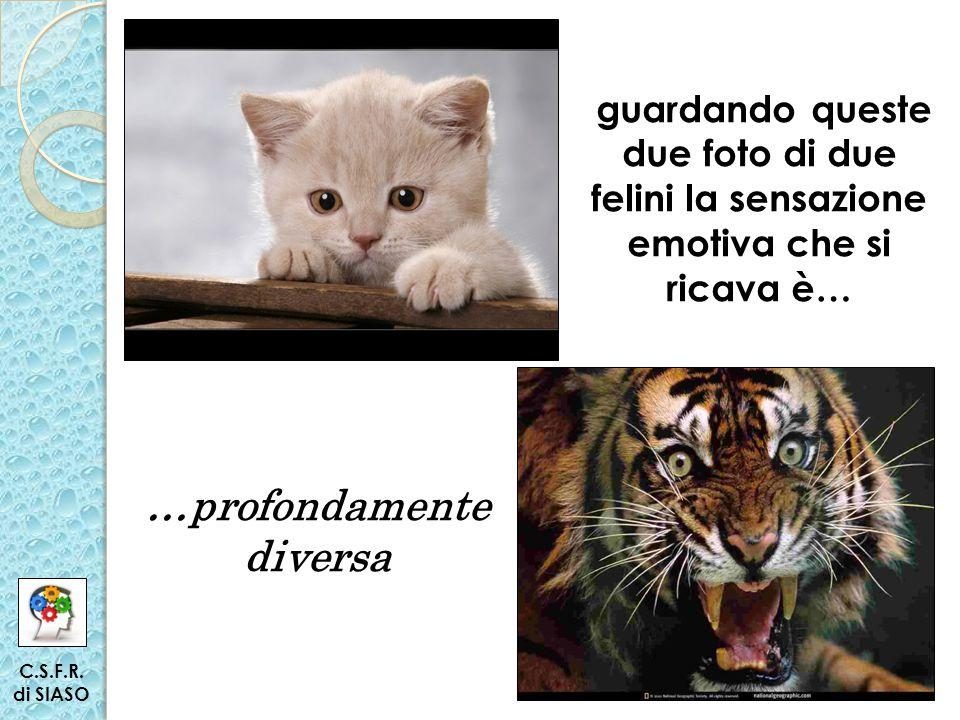 guardando queste due foto di due felini la sensazione emotiva che si ricava è… …profondamente diversa C.S.F.R.