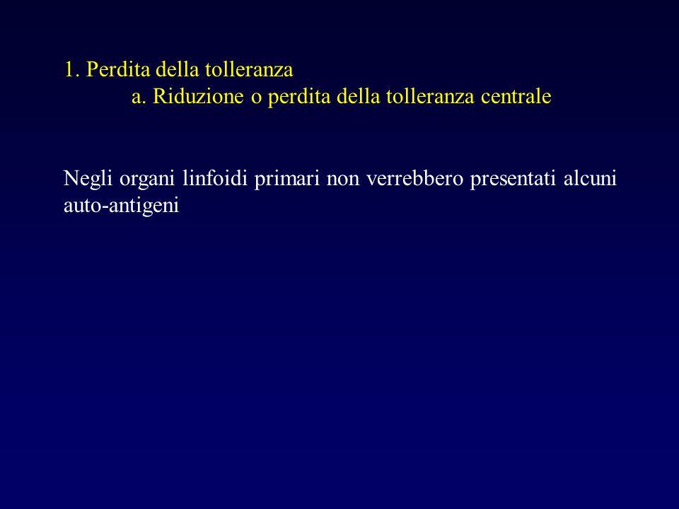 1. Perdita della tolleranza a. Riduzione o perdita della tolleranza centrale Negli organi linfoidi primari non verrebbero presentati alcuni auto-antig
