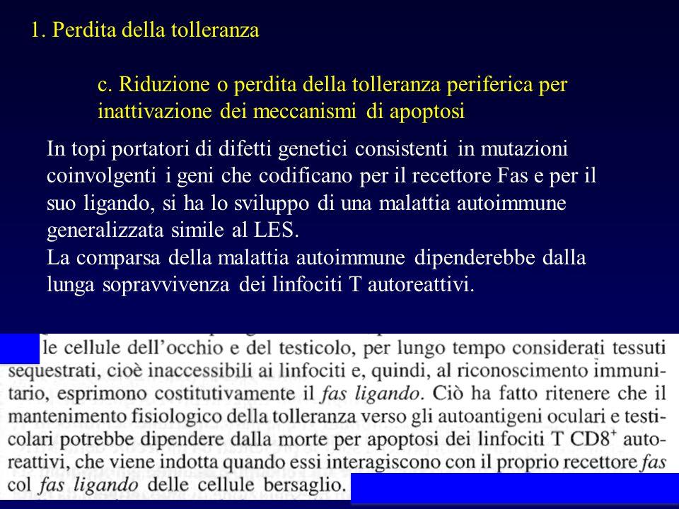 1. Perdita della tolleranza c. Riduzione o perdita della tolleranza periferica per inattivazione dei meccanismi di apoptosi In topi portatori di difet