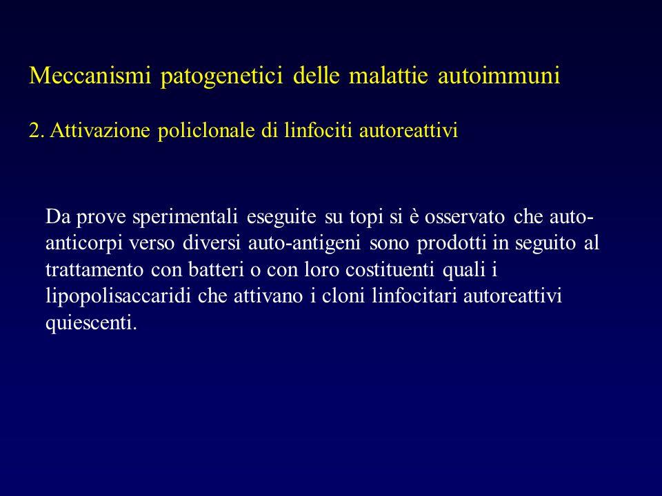 Meccanismi patogenetici delle malattie autoimmuni 2. Attivazione policlonale di linfociti autoreattivi Da prove sperimentali eseguite su topi si è oss