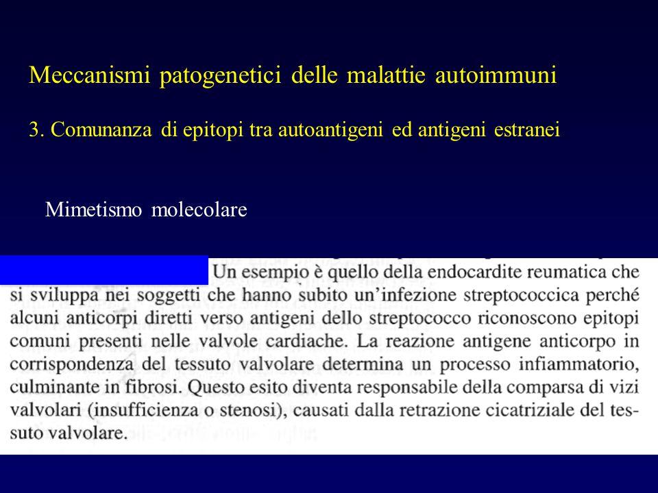 Meccanismi patogenetici delle malattie autoimmuni 3. Comunanza di epitopi tra autoantigeni ed antigeni estranei Mimetismo molecolare