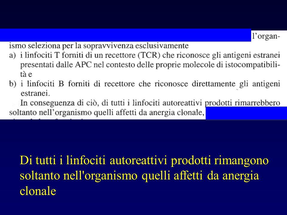 Di tutti i linfociti autoreattivi prodotti rimangono soltanto nell'organismo quelli affetti da anergia clonale