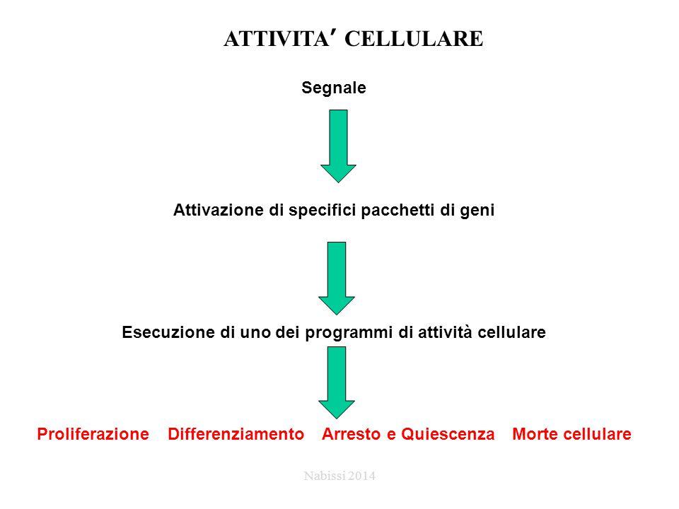 Segnale Attivazione di specifici pacchetti di geni Esecuzione di uno dei programmi di attività cellulare Proliferazione Differenziamento Arresto e QuiescenzaMorte cellulare ATTIVITA' CELLULARE Nabissi 2014