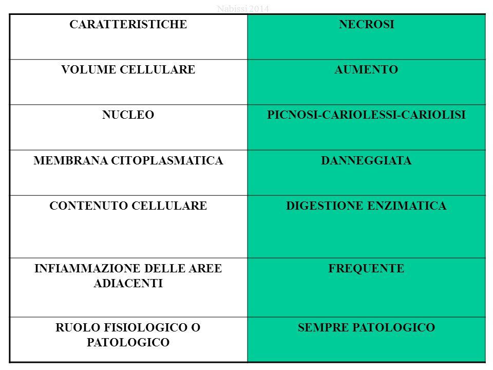 CARATTERISTICHENECROSI VOLUME CELLULAREAUMENTO NUCLEOPICNOSI-CARIOLESSI-CARIOLISI MEMBRANA CITOPLASMATICADANNEGGIATA CONTENUTO CELLULAREDIGESTIONE ENZIMATICA INFIAMMAZIONE DELLE AREE ADIACENTI FREQUENTE RUOLO FISIOLOGICO O PATOLOGICO SEMPRE PATOLOGICO Nabissi 2014