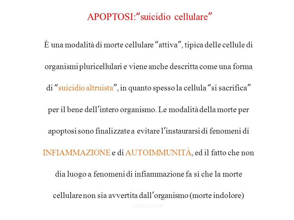 APOPTOSI: suicidio cellulare È una modalità di morte cellulare attiva , tipica delle cellule di organismi pluricellulari e viene anche descritta come una forma di suicidio altruista , in quanto spesso la cellula si sacrifica per il bene dell'intero organismo.