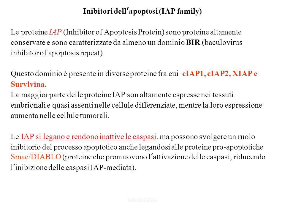 Inibitori dell'apoptosi (IAP family) Le proteine IAP (Inhibitor of Apoptosis Protein) sono proteine altamente conservate e sono caratterizzate da almeno un dominio BIR (baculovirus inhibitor of apoptosis repeat).