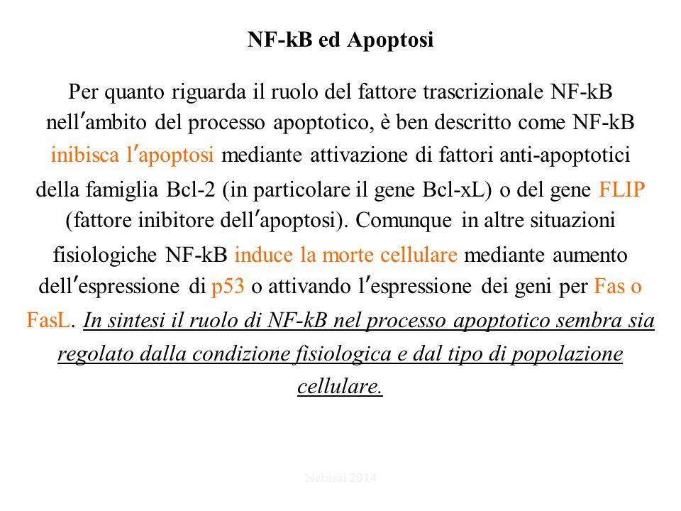 NF-kB ed Apoptosi Per quanto riguarda il ruolo del fattore trascrizionale NF-kB nell'ambito del processo apoptotico, è ben descritto come NF-kB inibisca l'apoptosi mediante attivazione di fattori anti-apoptotici della famiglia Bcl-2 (in particolare il gene Bcl-xL) o del gene FLIP (fattore inibitore dell'apoptosi).