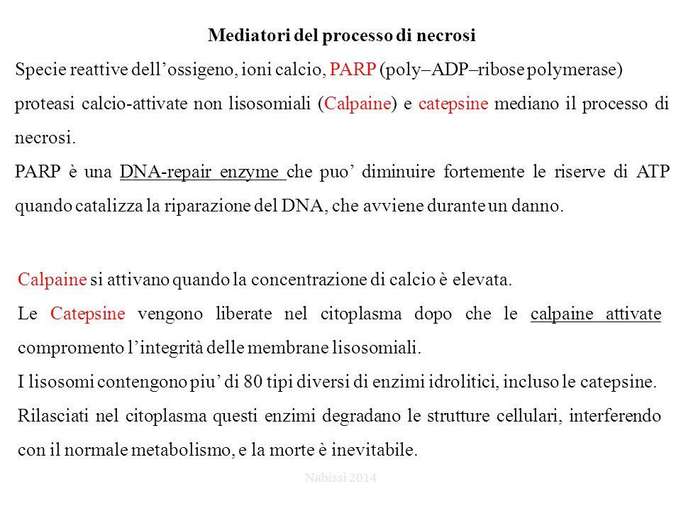 Agenti pro-apoptotici come bersaglio il pathway estrinseco Nabissi 2014