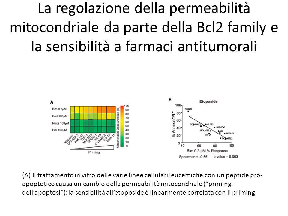 La regolazione della permeabilità mitocondriale da parte della Bcl2 family e la sensibilità a farmaci antitumorali (A) Il trattamento in vitro delle v