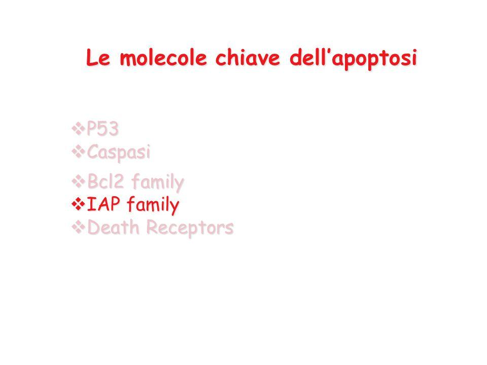  P53  Caspasi  Bcl2 family  IAP family  Death Receptors Le molecole chiave dell'apoptosi