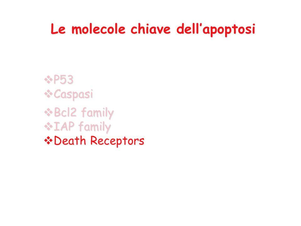 Le molecole chiave dell'apoptosi  P53  Caspasi  Bcl2 family  IAP family  Death Receptors