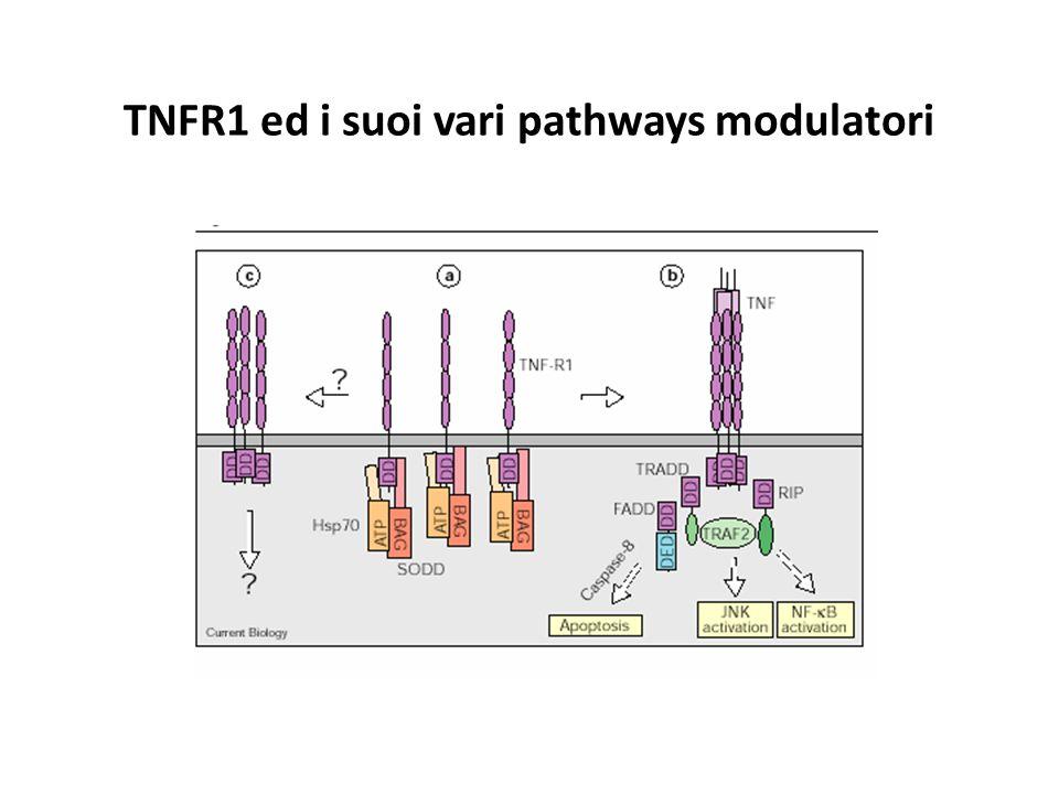 TNFR1 ed i suoi vari pathways modulatori