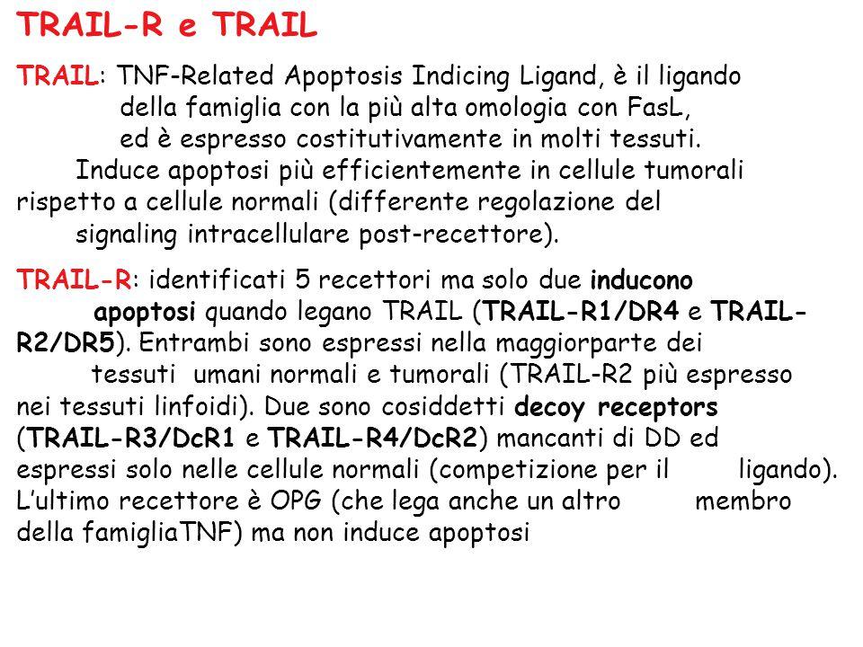 TRAIL-R e TRAIL TRAIL: TNF-Related Apoptosis Indicing Ligand, è il ligando della famiglia con la più alta omologia con FasL, ed è espresso costitutiva