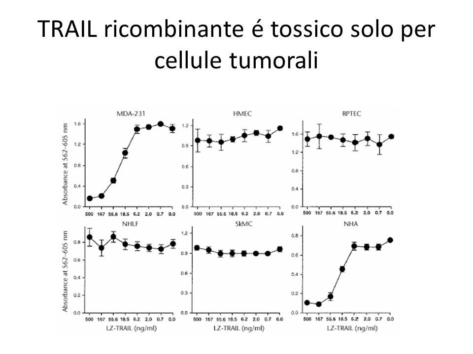 TRAIL ricombinante é tossico solo per cellule tumorali