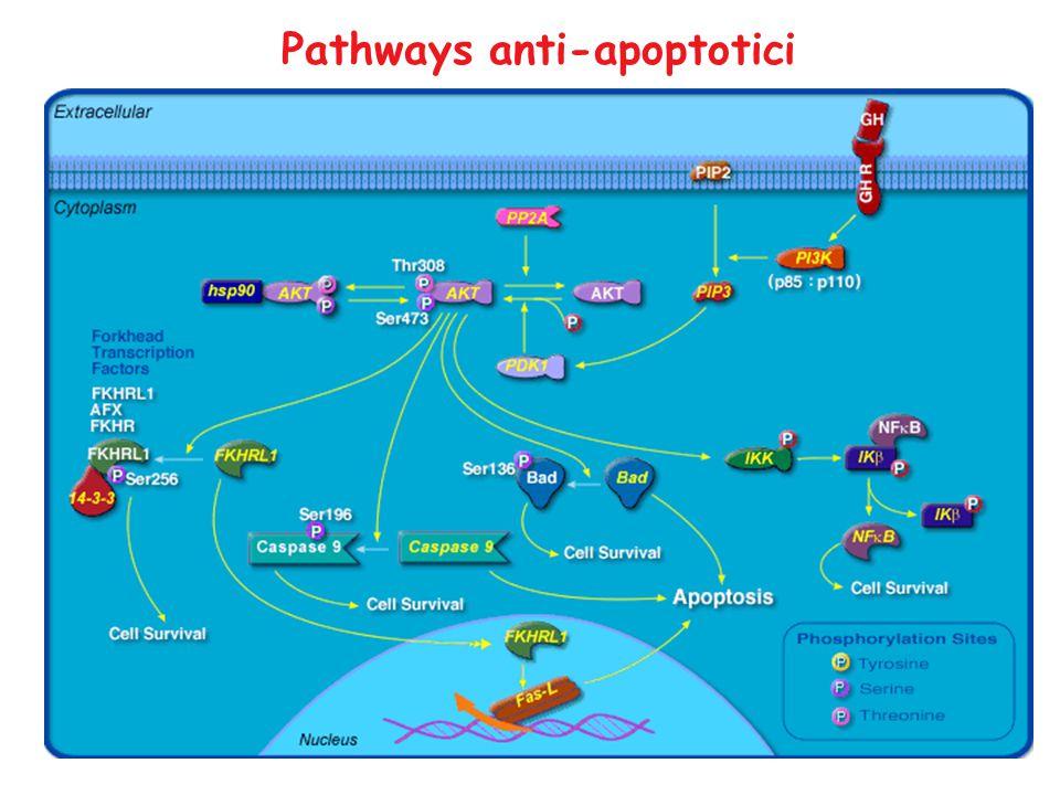 Pathways anti-apoptotici