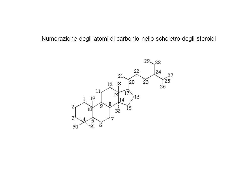 Numerazione degli atomi di carbonio nello scheletro degli steroidi