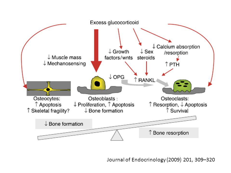 Journal of Endocrinology (2009) 201, 309–320