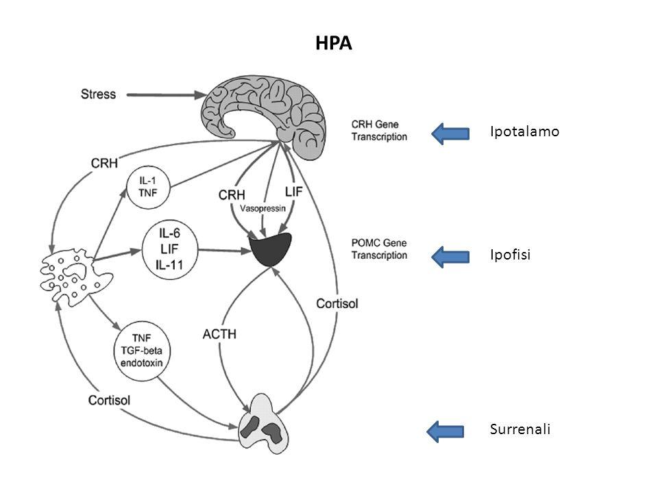 Attivazione classica e alternativa dei macrofagi.