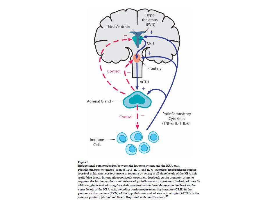 I glucocorticoidi sono degli ormoni rilasciati dale ghiandole surrenali sotto lo stimolo ipofisario dell'ACTH e ancor prima dallo stimolo ipotalamico rappresentato dal CRH.
