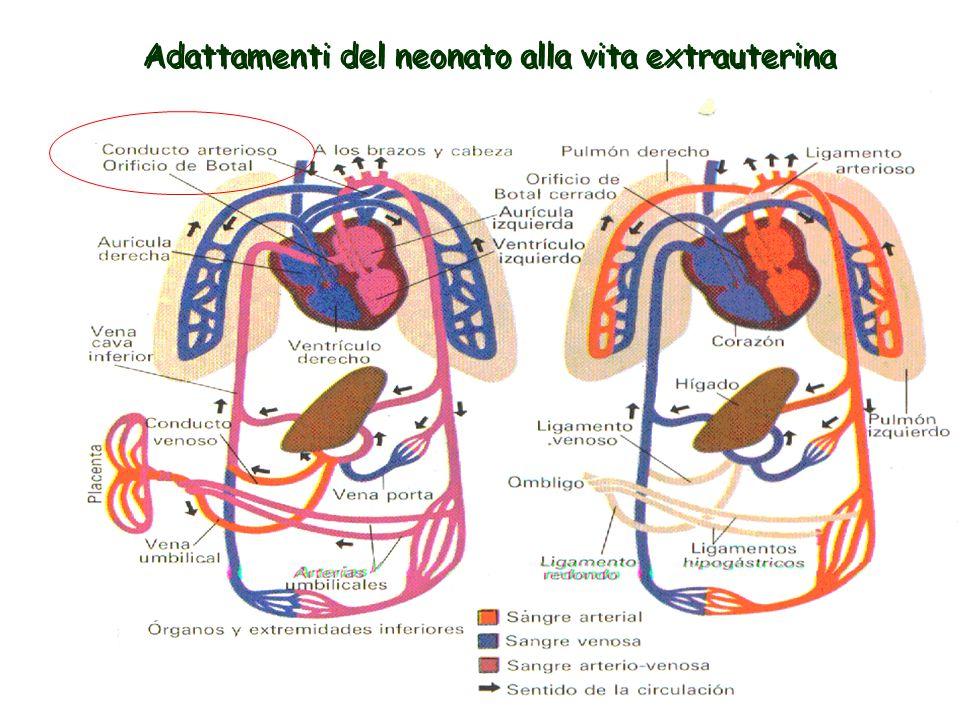 Adattamenti del neonato alla vita extrauterina