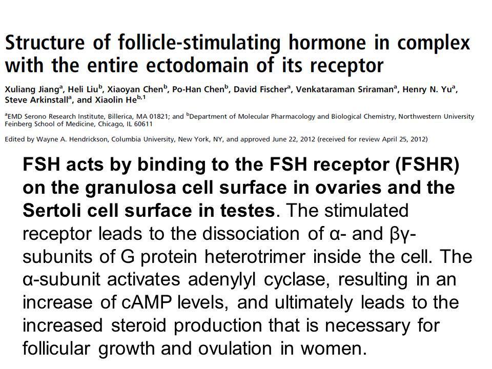 Nell'uomo gli ormoni gonadotropici sono obbligatori per lo sviluppo e la differenziazione dei spermatogoni, degli spermatociti e dei spermatidi.