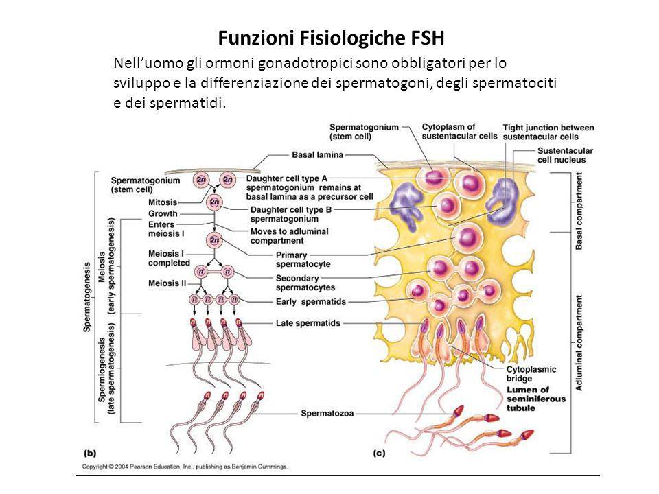 La spermatogenesi può iniziare precocemente nei primati quando FSH ed LH vengono aumentati farmacologicamente o in condizioni patologiche.