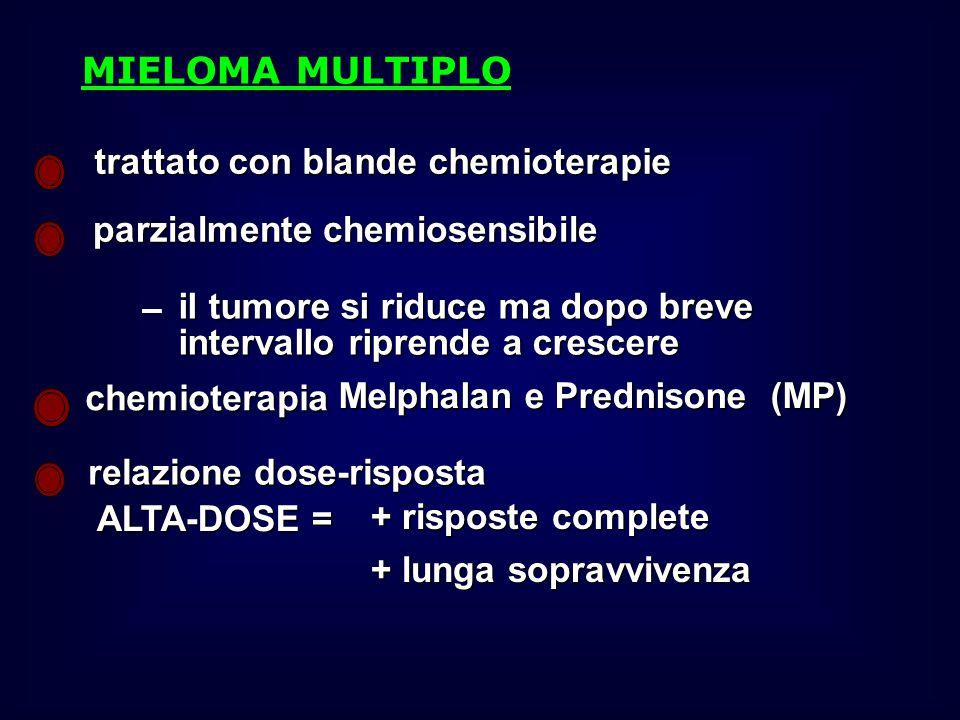 trattato con blande chemioterapie parzialmente chemiosensibile il tumore si riduce ma dopo breve intervallo riprende a crescere chemioterapia Melphalan e Prednisone (MP) relazione dose-risposta ALTA-DOSE = + risposte complete + lunga sopravvivenza MIELOMA MULTIPLO