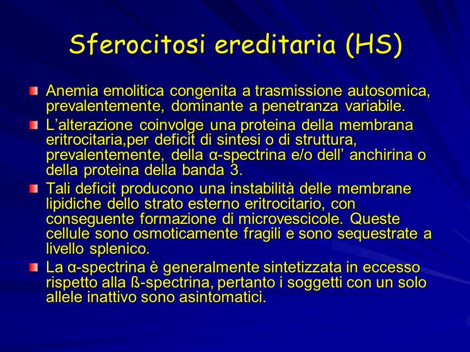 Sferocitosi ereditaria (HS) Anemia emolitica congenita a trasmissione autosomica, prevalentemente, dominante a penetranza variabile. L'alterazione coi