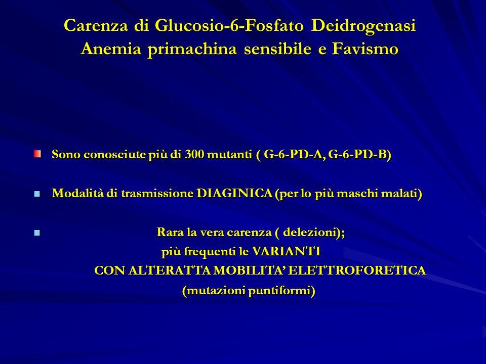 Carenza di Glucosio-6-Fosfato Deidrogenasi Anemia primachina sensibile e Favismo Sono conosciute più di 300 mutanti ( G-6-PD-A, G-6-PD-B) Modalità di trasmissione DIAGINICA (per lo più maschi malati) Modalità di trasmissione DIAGINICA (per lo più maschi malati) Rara la vera carenza ( delezioni); Rara la vera carenza ( delezioni); più frequenti le VARIANTI più frequenti le VARIANTI CON ALTERATTA MOBILITA' ELETTROFORETICA CON ALTERATTA MOBILITA' ELETTROFORETICA (mutazioni puntiformi) (mutazioni puntiformi)