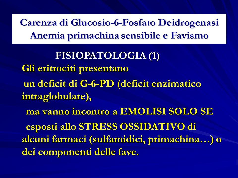 Carenza di Glucosio-6-Fosfato Deidrogenasi Anemia primachina sensibile e Favismo FISIOPATOLOGIA (1) Gli eritrociti presentano FISIOPATOLOGIA (1) Gli eritrociti presentano un deficit di G-6-PD (deficit enzimatico intraglobulare), un deficit di G-6-PD (deficit enzimatico intraglobulare), ma vanno incontro a EMOLISI SOLO SE ma vanno incontro a EMOLISI SOLO SE esposti allo STRESS OSSIDATIVO di alcuni farmaci (sulfamidici, primachina…) o dei componenti delle fave.