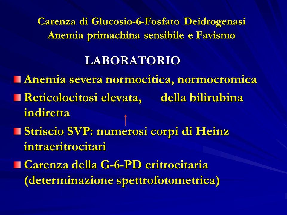 Carenza di Glucosio-6-Fosfato Deidrogenasi Anemia primachina sensibile e Favismo LABORATORIO LABORATORIO Anemia severa normocitica, normocromica Reticolocitosi elevata, della bilirubina indiretta Striscio SVP: numerosi corpi di Heinz intraeritrocitari Carenza della G-6-PD eritrocitaria (determinazione spettrofotometrica)