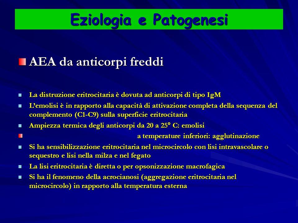 Eziologia e Patogenesi AEA da anticorpi freddi La distruzione eritrocitaria è dovuta ad anticorpi di tipo IgM La distruzione eritrocitaria è dovuta ad anticorpi di tipo IgM L'emolisi è in rapporto alla capacità di attivazione completa della sequenza del complemento (C1-C9) sulla superficie eritrocitaria L'emolisi è in rapporto alla capacità di attivazione completa della sequenza del complemento (C1-C9) sulla superficie eritrocitaria Ampiezza termica degli anticorpi da 20 a 25° C: emolisi Ampiezza termica degli anticorpi da 20 a 25° C: emolisi a temperature inferiori: agglutinazione a temperature inferiori: agglutinazione Si ha sensibilizzazione eritrocitaria nel microcircolo con lisi intravascolare o sequestro e lisi nella milza e nel fegato Si ha sensibilizzazione eritrocitaria nel microcircolo con lisi intravascolare o sequestro e lisi nella milza e nel fegato La lisi eritrocitaria è diretta o per opsonizzazione macrofagica La lisi eritrocitaria è diretta o per opsonizzazione macrofagica Si ha il fenomeno della acrocianosi (aggregazione eritrocitaria nel microcircolo) in rapporto alla temperatura esterna Si ha il fenomeno della acrocianosi (aggregazione eritrocitaria nel microcircolo) in rapporto alla temperatura esterna