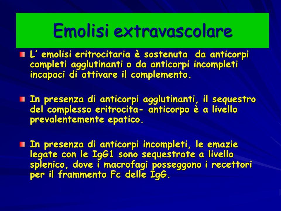 Emolisi extravascolare L' emolisi eritrocitaria è sostenuta da anticorpi completi agglutinanti o da anticorpi incompleti incapaci di attivare il compl