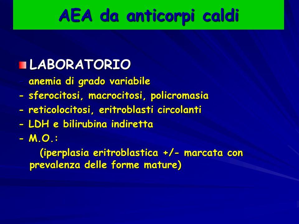 AEA da anticorpi caldi LABORATORIO - anemia di grado variabile - sferocitosi, macrocitosi, policromasia - reticolocitosi, eritroblasti circolanti - LDH e bilirubina indiretta - M.O.: (iperplasia eritroblastica +/- marcata con prevalenza delle forme mature) (iperplasia eritroblastica +/- marcata con prevalenza delle forme mature)