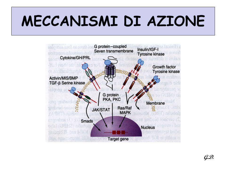 MECCANISMI DI AZIONE G.D.