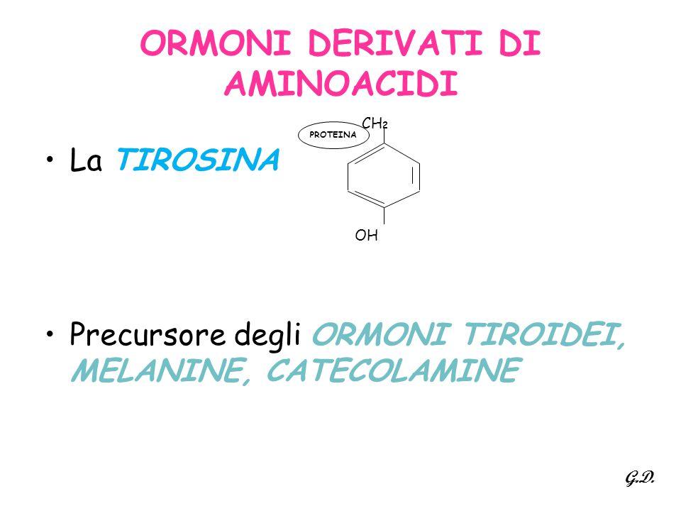 ORMONI DERIVATI DI AMINOACIDI La TIROSINA Precursore degli ORMONI TIROIDEI, MELANINE, CATECOLAMINE OH CH 2 PROTEINA G.D.