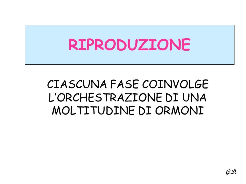 RIPRODUZIONE CIASCUNA FASE COINVOLGE L'ORCHESTRAZIONE DI UNA MOLTITUDINE DI ORMONI G.D.
