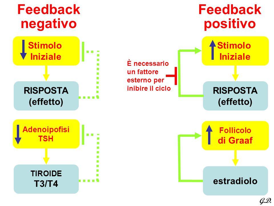 Feedback negativo Stimolo Iniziale RISPOSTA (effetto) È necessario un fattore esterno per inibire il ciclo Feedback positivo Stimolo Iniziale RISPOSTA
