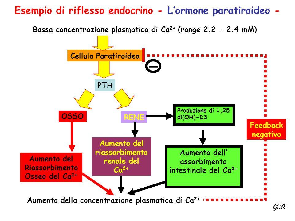 Esempio di riflesso endocrino - L'ormone paratiroideo - OSSO RENE Aumento della concentrazione plasmatica di Ca 2+ Produzione di 1,25 di(OH)-D3 Aument