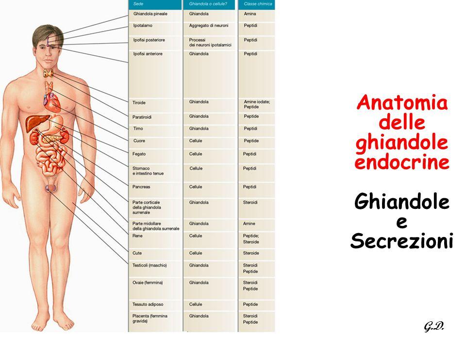 Anatomia delle ghiandole endocrine Ghiandole e Secrezioni G.D.