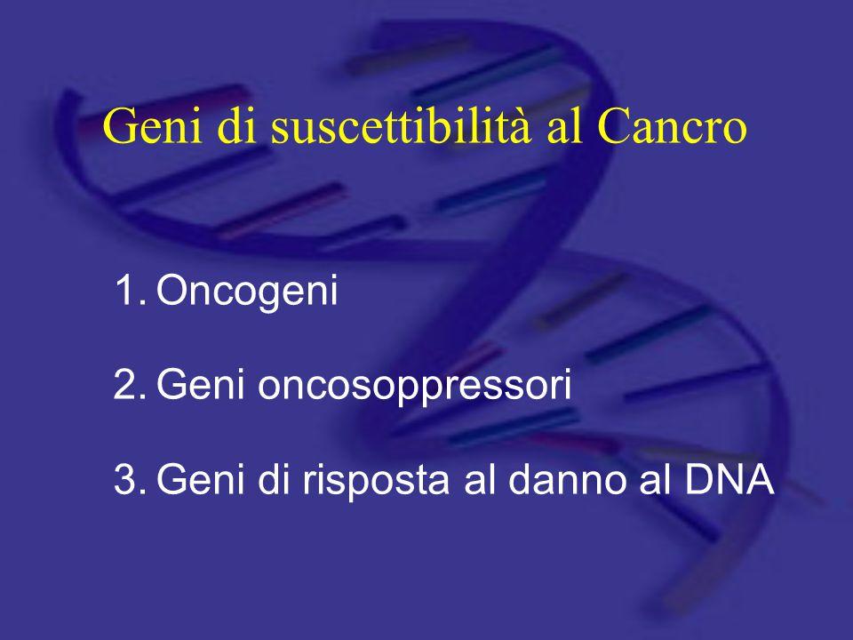 Geni di suscettibilità al Cancro 1.Oncogeni 2.Geni oncosoppressori 3.Geni di risposta al danno al DNA