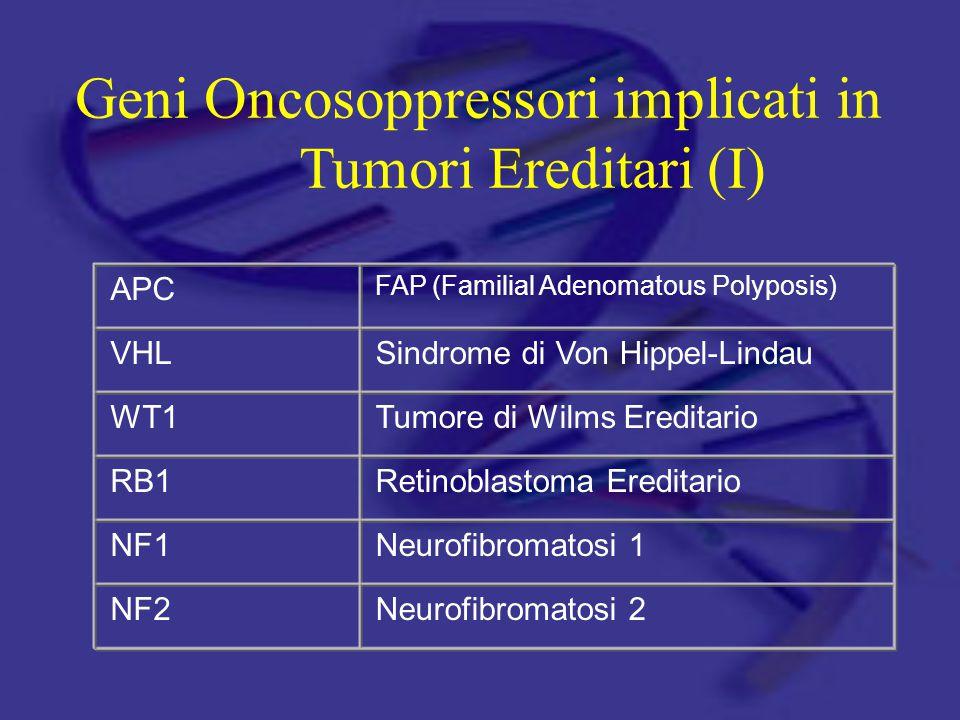Geni Oncosoppressori implicati in Tumori Ereditari (I) APC FAP (Familial Adenomatous Polyposis) VHLSindrome di Von Hippel-Lindau WT1Tumore di Wilms Ereditario RB1Retinoblastoma Ereditario NF1Neurofibromatosi 1 NF2Neurofibromatosi 2