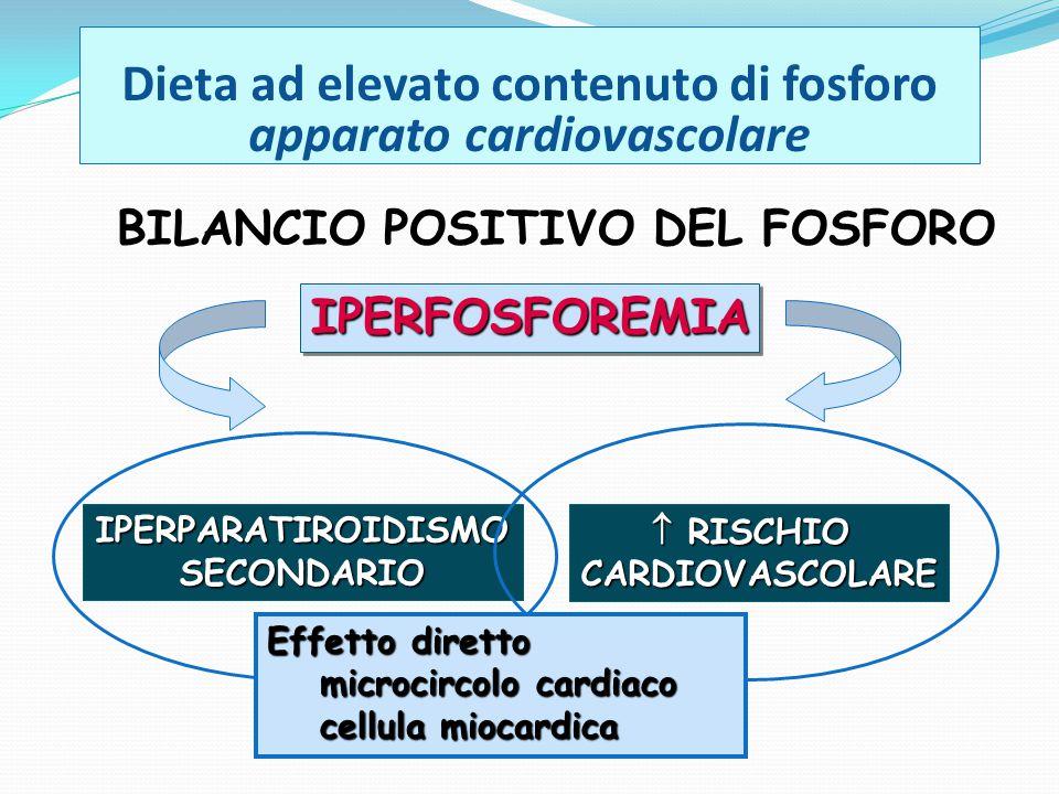 Dieta ad elevato contenuto di fosforo apparato cardiovascolare IPERPARATIROIDISMOSECONDARIO BILANCIO POSITIVO DEL FOSFORO IPERFOSFOREMIAIPERFOSFOREMIA  RISCHIO CARDIOVASCOLARE Effetto diretto microcircolo cardiaco cellula miocardica