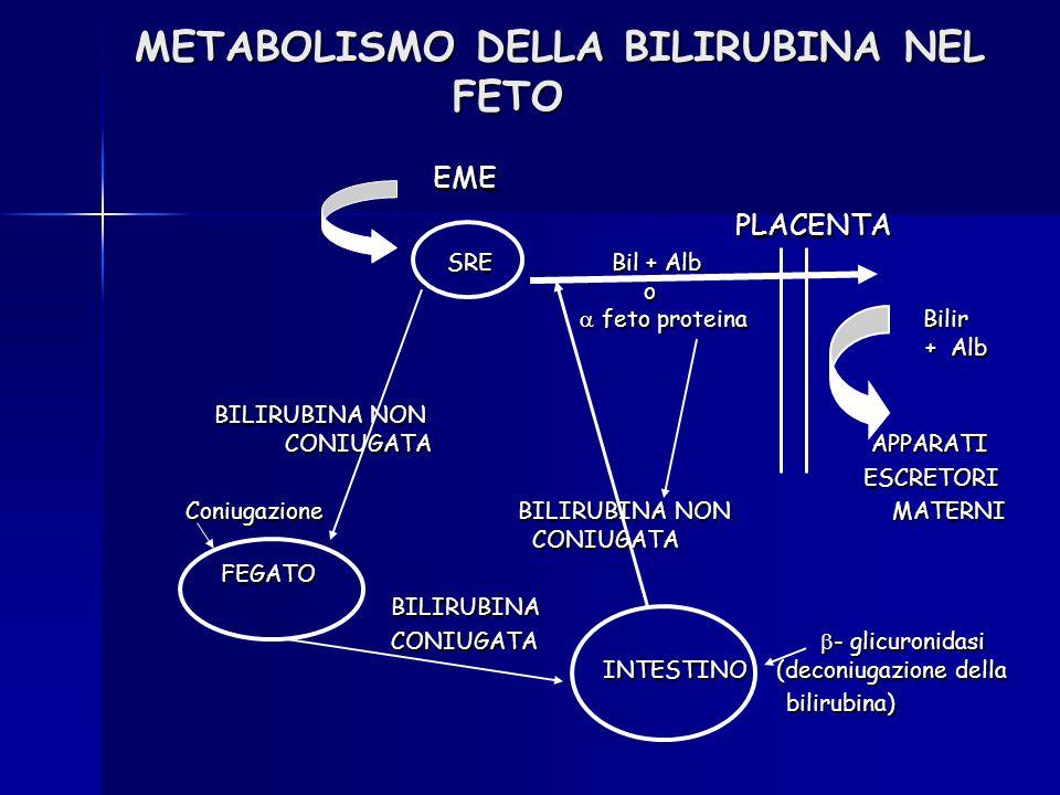 METABOLISMO DELLA BILIRUBINA NEL FETO EME EME PLACENTA PLACENTA SRE Bil + Alb o  feto proteina Bilir + Alb SRE Bil + Alb o  feto proteina Bilir + Al