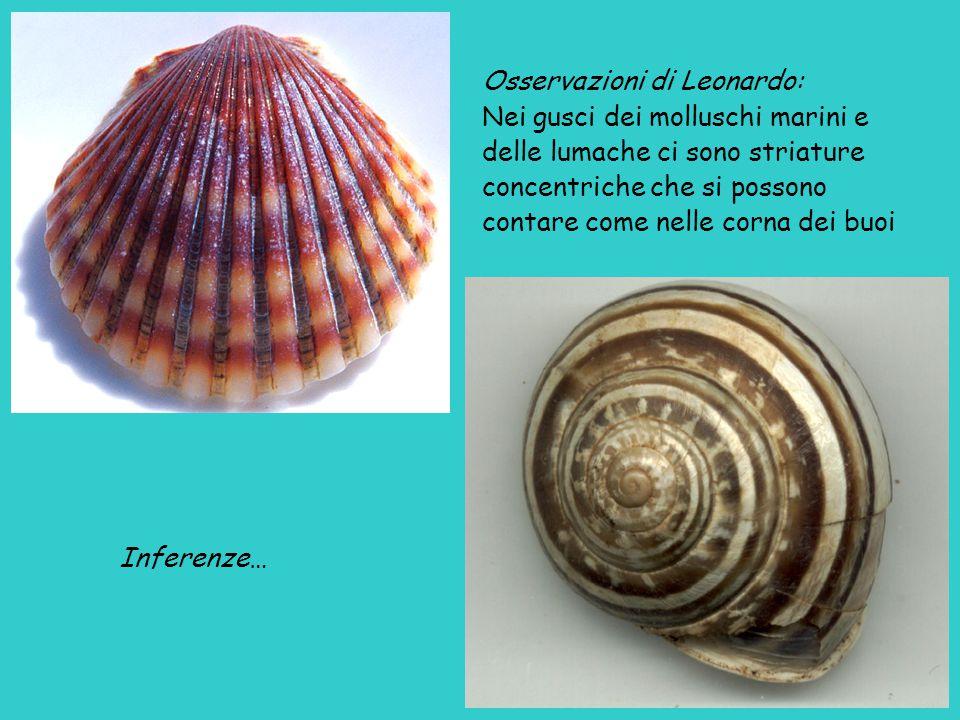 Osservazioni di Leonardo: Nei gusci dei molluschi marini e delle lumache ci sono striature concentriche che si possono contare come nelle corna dei buoi Inferenze…