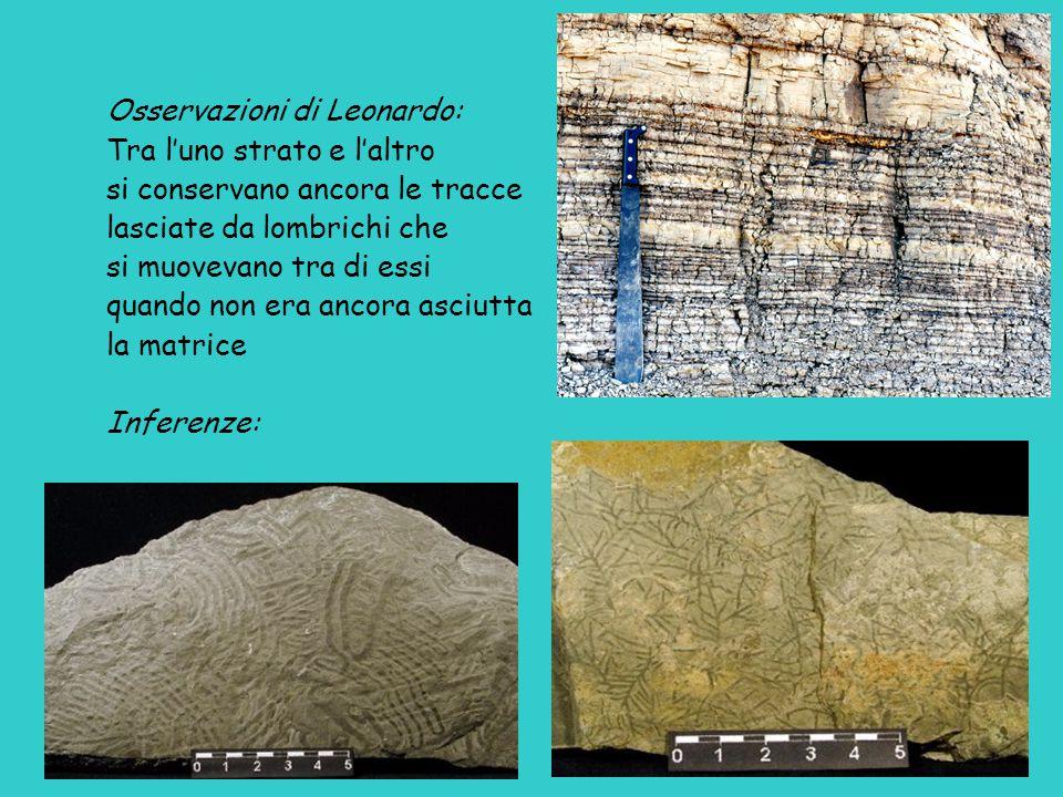 Osservazioni di Leonardo: Tra l'uno strato e l'altro si conservano ancora le tracce lasciate da lombrichi che si muovevano tra di essi quando non era ancora asciutta la matrice Inferenze: